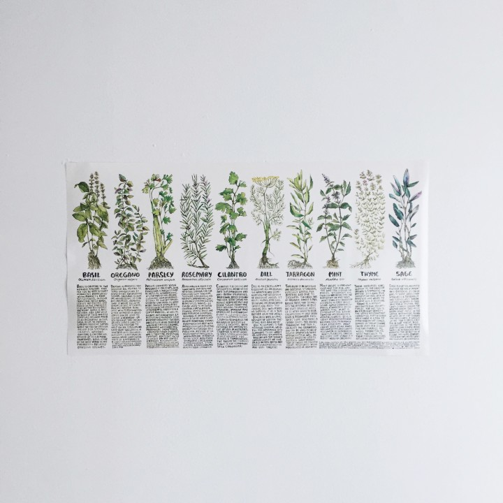 thyme herbal interview